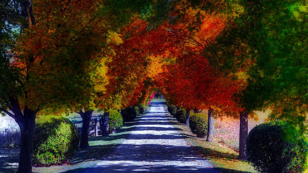 Ein Sonntag im Herbst ☘ Die Trägheit des Aufstehens