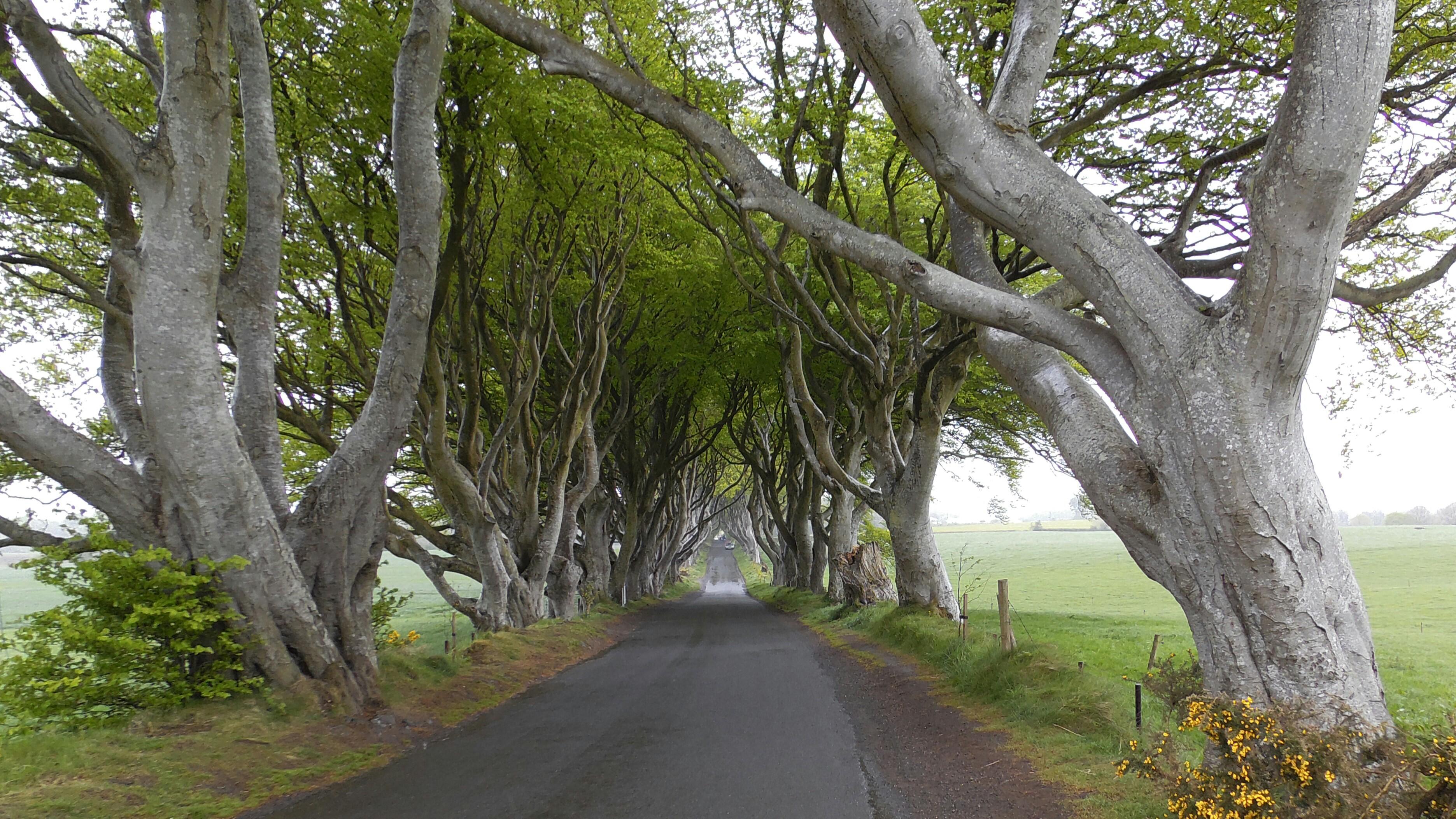 Rundreise Nordirland Tag 3 – Der Königsweg